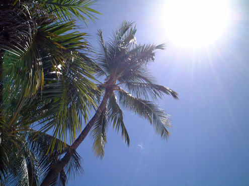 ハワイ オアフ島 椰子の木