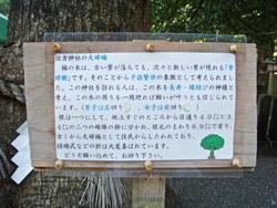 住吉神社の夫婦楠