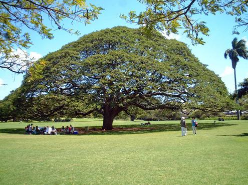 この木なんの木きになる木