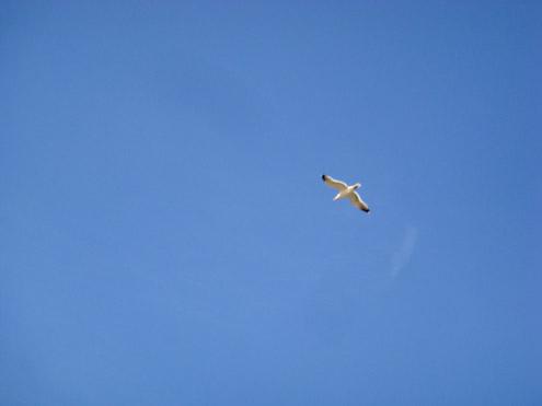清石浜の鳥|壱岐