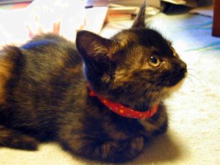 猫 性格 サビ