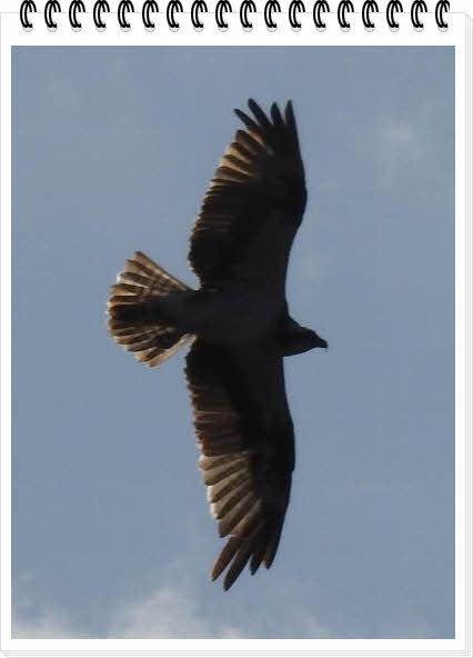 wingDSCN8321.jpg