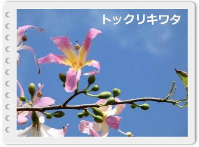 編集_P1210604.jpg