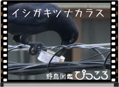 Photo Editor_P1780564.jpg