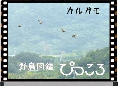 Photo Editor_P1660766.jpg