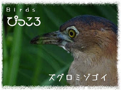 Photo Editor_DSC00716.jpg