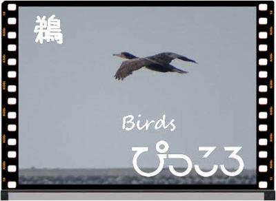 Photo Editor_DSC01942.jpg