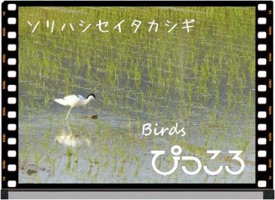 Photo Editor_P1670352.jpg