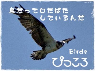 oniDSC04453waku.jpg