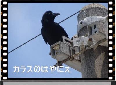 Photo Editor_DSC05852.jpg
