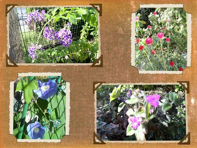 PicsArt_10-15-09.06.11.jpg