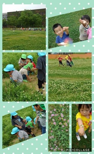 Collage 2018-05-18 04_01_58.jpg