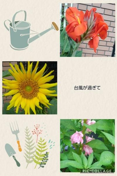 Collage 2018-07-04 20_43_22.jpg