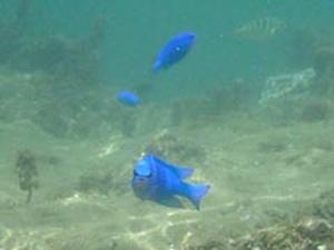 おやっ!魚がカメラ目線。