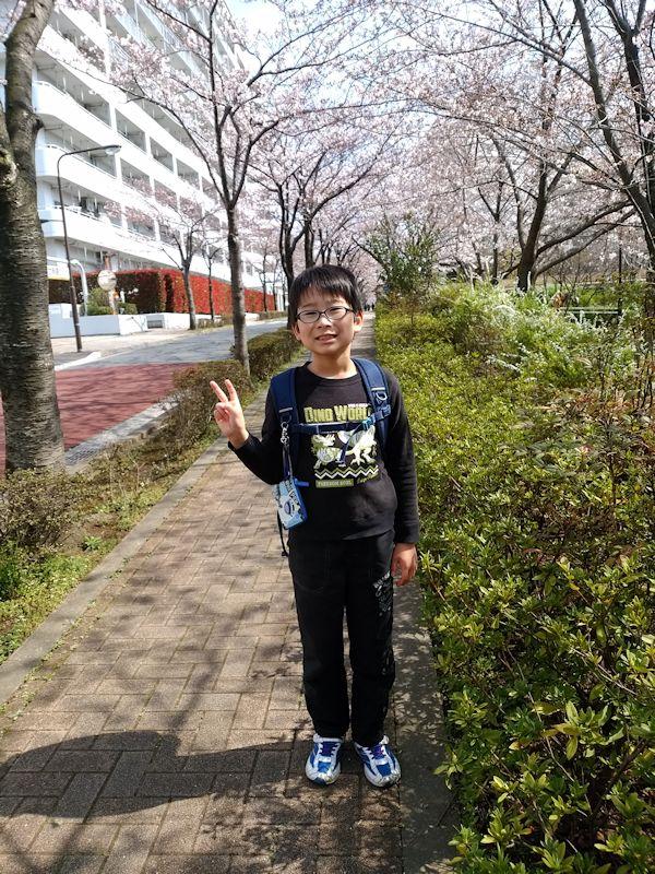 桜 10歳
