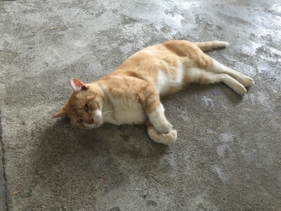 網代猫01