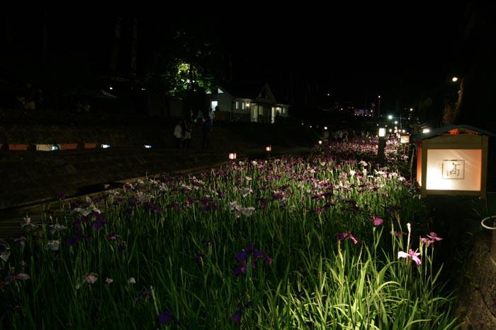 090605_花菖蒲祭り13