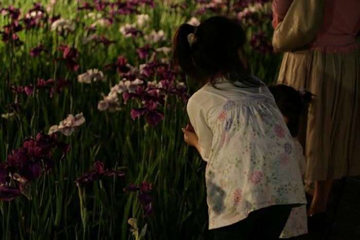 090605_花菖蒲祭り15