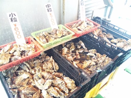 販売される牡蠣