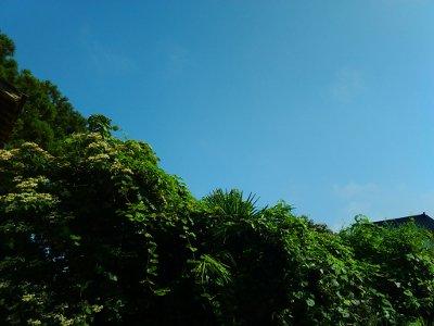 青い空と緑の草木