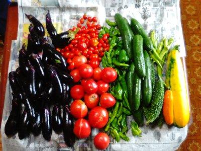 収穫夏野菜