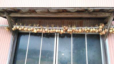 吊るした玉葱