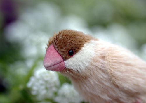 081127シナモン文鳥1