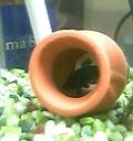 ベタの隠れ家の壺