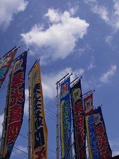 佐渡ヶ嶽部屋の旗。 数が多い!