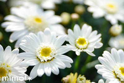 見元園芸 トミーの庭 ブログ 春の寄せ植え 園芸 ガーデン