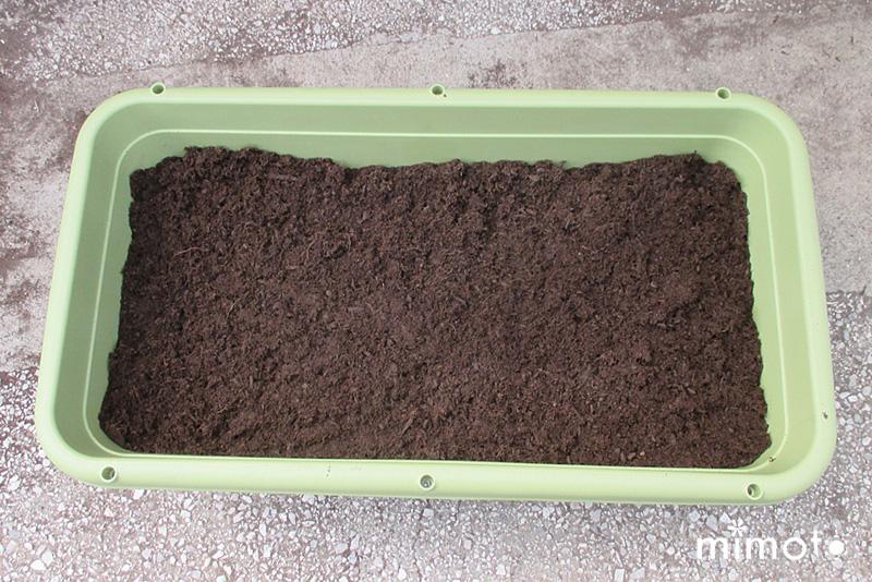 種しょうが 種芋 種イモ 種子 業務用 販売 通販 龍馬しょうが