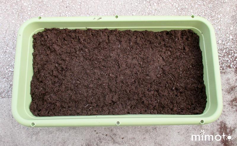 種しょうが 種芋 種イモ 種子 業務用 栽培記 龍馬しょうが 龍馬生姜