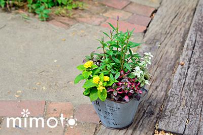 種まき用 挿し木用 培養土 園芸 ガーデニング