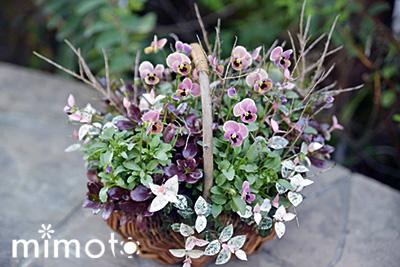 見元園芸 お花の定期便 頒布会 トミーの庭 ガーデン 園芸 ガーデニング