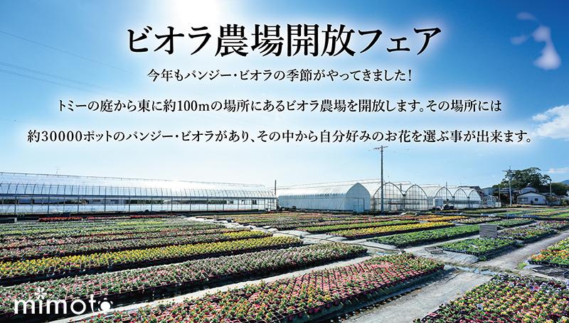 見元園芸 オリジナルビオラ パンジー 農場開放フェア イベント