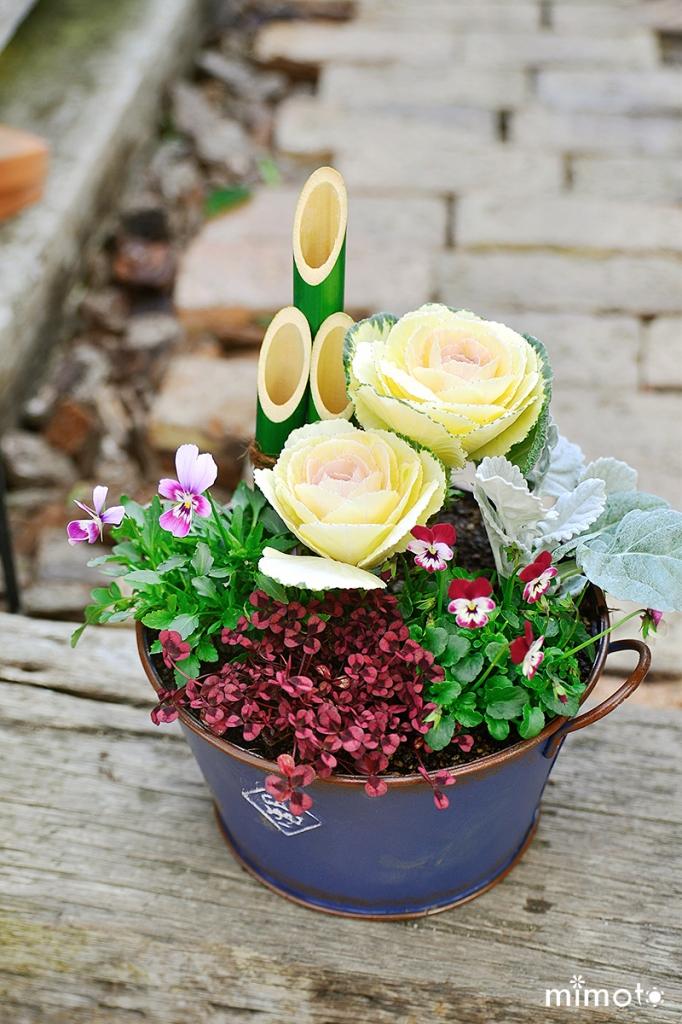 見元園芸 ブログ blog オリジナルビオラ お花の定期便 贈り物 プレゼント フラワーバレンタイン