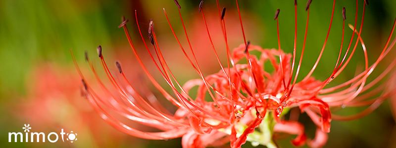 2019年 令和元年 見元園芸 季節の寄せ植え 秋の寄せ植え アスタープリンス