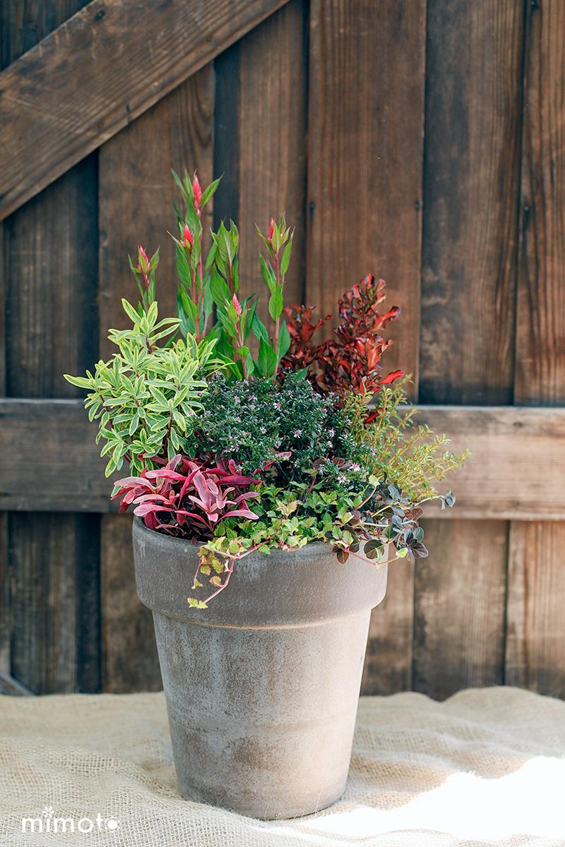 季節の寄せ植え 秋の寄せ植え アスタープリンス