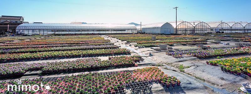 令和元年 2019年 ビオラ農場開放フェア 見元園芸 トミーの庭 ウィークエンドカフェ 寄せ植え教室