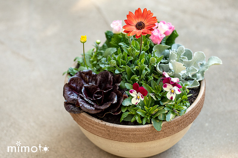 春 お花の定期便 見元園芸 販売通販 園芸 ガーデニング