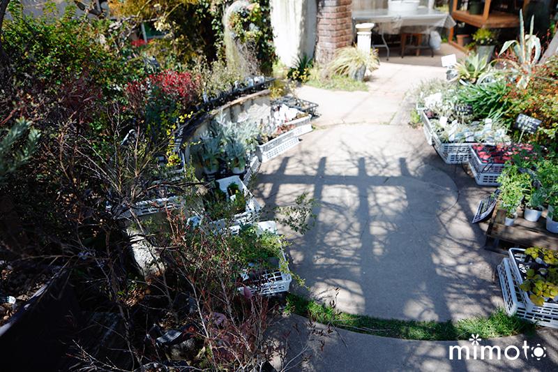 見元園芸 トミーの庭 種しょうが 龍馬しょうが 販売 通販 出荷 予約受付中