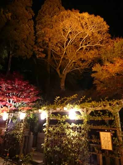 円通院ライトアップ_618.jpg