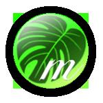 サボテン・多肉植物・観葉植物の通販・販売サイト 【観葉植物のmisc.】