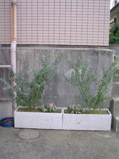 植栽、小田急相模原