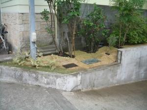 庭木の植込み