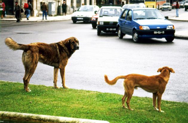 Dogs 道路を横断する犬たち
