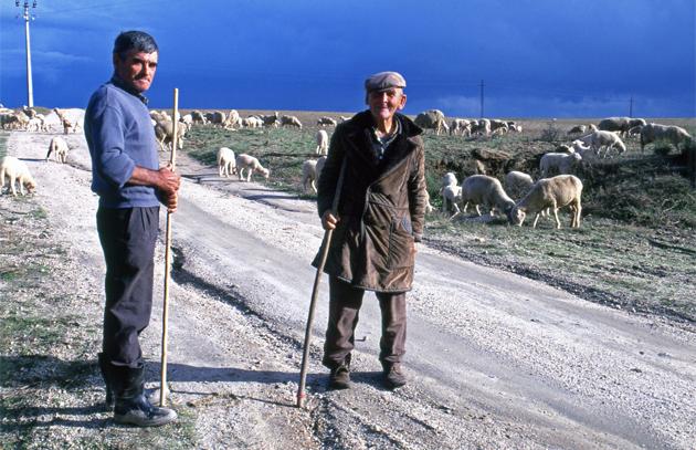 Shepherds 羊飼い