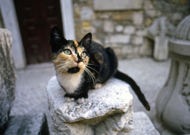 Cat of Carmo monastry カルモ修道院の猫