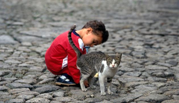 Child & Cat 子供と猫
