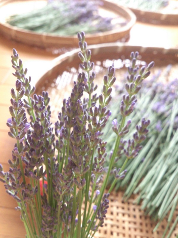 Lavender2014.7